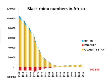Crisis   Declining Black Rhino Numbers Since 1960  800x600